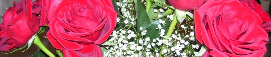Ariadne's roses.